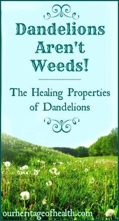 Dandelions aren't weeds! The healing properties of dandelions | Our Heritage of Health
