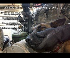 A very loved Military Dog Hero! Military Working Dogs, Military Dogs, Police Dogs, Military Photos, Military Style, Animal Heros, War Dogs, German Shepherd Dogs, German Shepherds