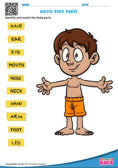 Printable science body parts for preschool and kindergarten. Help kids to identify the each part of body. Kids will be able to draw a line from each label to the correct part of the body. Body Parts For Kids, Body Parts Preschool, Human Body Parts, Parts Of The Body, Teach English To Kids, English Worksheets For Kids, Kids English, Printable Preschool Worksheets, Science Worksheets