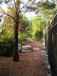 idea for next to fence back yard - where the dogs run
