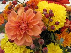 Dahlias, mums and rose hips