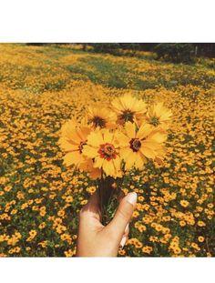 a mood yellow aesthetic mood cute flowers grain vsco orange