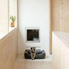 Dog beds   Kind