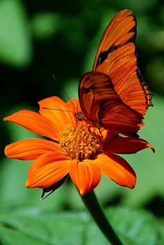 Color on Color |  Orange butterfly on a bright orange flower