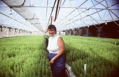 Abbie Acuff. 2.5 million seedlings.