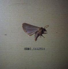 Corc - Calitja (@ http://corc.bandcamp.com/album/calitja#) - Selfreleased 2010