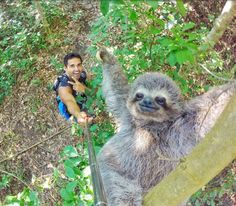 Check out the moment a tour guide used his selfie stick to take the most amazingly cute sloth selfie ever! Such a cute sloth selfie picture! Animals And Pets, Baby Animals, Funny Animals, Cute Animals, Animals Amazing, Nature Animals, Funny Cute, Hilarious, Super Funny