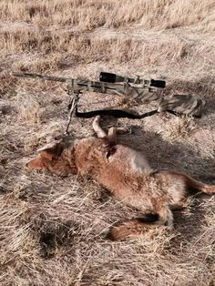 Coyote hunting Predator Hunting, Coyote Hunting, Hunting Tips, Hunting Rifles, Hunting Stuff, Varmint Hunting, Hunting Painting, Hunting Calls, Hunting Pictures