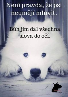 I love dog❤❤❤❤❤ True Quotes About Life, Life Quotes, I Love Dogs, Cute Dogs, English Words, Dog Quotes, True Friends, True Words, Cool Words