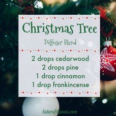 10 Christmas Essential Oil Blends for Beautiful Festive Aromas - Natural Mavens Christmas Tree Diffuser Blend Yl Oils, Essential Oil Diffuser Blends, Doterra Oils, Doterra Essential Oils, Doterra Blends, Young Living Oils, Young Living Essential Oils, Essential Oils Christmas, Diffuser Recipes