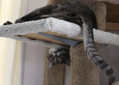 Funny Cat Hanging Upside Down on Kitty Tree