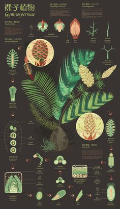 Botanical Infographics by Biqi Zhang
