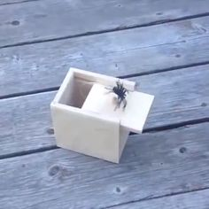 When you remove the lid, the animals in the wooden box will jump out. An amazing box with vivid animals inside. Great toys, make fun of, let others laugh. Can also be your home decorations. Use this trick box to fool your friends on April Fool's Day. Spider Prank, The Animals, Good Pranks, Kids Pranks, Easy Pranks, School Pranks, Sleepover Pranks, Pranks Hilarious, Funny Pictures