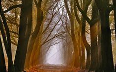 sun_rays_on_trees-wi