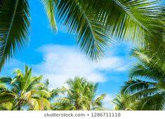Hasonló képek, stockfotók és vektorképek ehhez: palm trees in cloudy sky – 1541876894 | Shutterstock