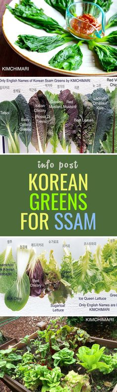 A guide to lettuce wrap culture in Korean cuisine, and example veggies to try :)