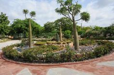 http://fourscape.com/softscape/xeriscaping-landscaping-india/
