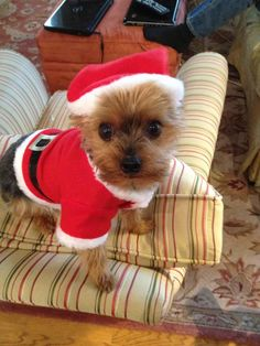 I know Santa is supposed to give out presents, but can i atleast get a treat here????