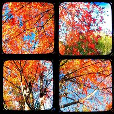 Autumn brings comfy sweaters, beautiful weather, colorful trees, spiced pumpkin lattés and cider.