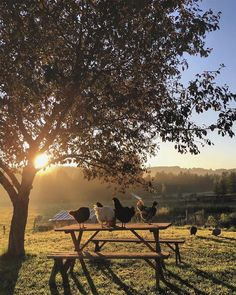 Chickens on wood bench /picnic table sunrise countryside Country Farm, Country Life, Country Living, Country Roads, Esprit Country, Vie Simple, Flora Und Fauna, Serenity, Life Is Good