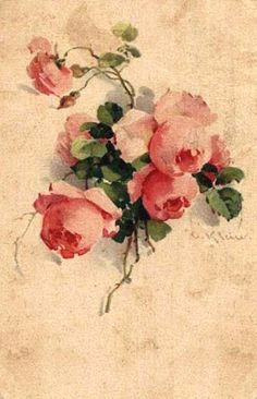 Catharina Klein.   a researcher named j truskot thinks that these roses are  Souvenier de Malmaison, an old bourbon rose.