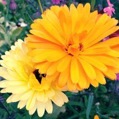 Mooie bloemetjes