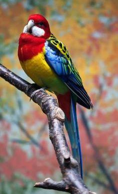 Beautiful Bird, China by lara