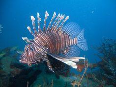 Diving Madagascar...  http://www.paradise-plongee.com/articles-et-reportages-sur-la-plongee/trek-et-voyage-plongee-a-madagascar.html