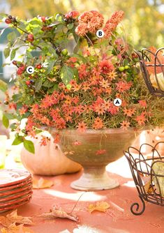 Liven up your fall garden with these stunning container garden ideas. Get creative with seasonal favorites such as mums, flowering kale, and pansies, or play with dynamic combinations of annuals, perennials, and grasses that also make excellent fall container plants. #fallcontainergarden #containergardenplans #fallgardening #flowerpots #bhg Fall Container Plants, Container Herb Garden, Fall Containers, Container Gardening Vegetables, Container Flowers, Garden Pots, Garden Ideas, Flowering Kale