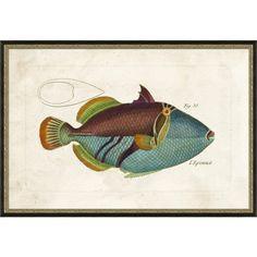 Large Tropic Fish IV
