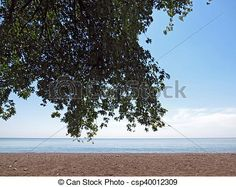 Lounging in the shade under a tree on the beach.