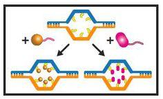 DNA nanorobots deliver 'suicide' messages to cancer2
