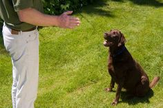 Here are some useful and Easy Dog Obedience Training Tips that can make your training procedure easier.Dog obedient training is not so easy and you will have to know something about it. Best Dog Training, Training Online, Training Classes, Pet Trainer, Aggressive Dog, Dog Barking, Free Dogs, New Puppy, Dog Training