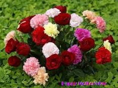 Image result for beautiful flowers