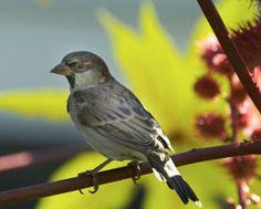 bird-friendly attractions in the garden