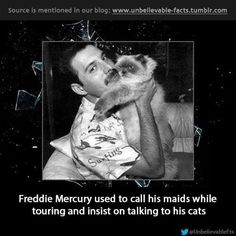 Freddie Mercury used to call his maids while touring and insist on talking to his cats. I just ask that the cat sitter text me photos. Crazy Cat Lady, Crazy Cats, Mr Fahrenheit, Queen Facts, Cat Sitter, Queen Freddie Mercury, Unbelievable Facts, Queen Band, Cat Boarding