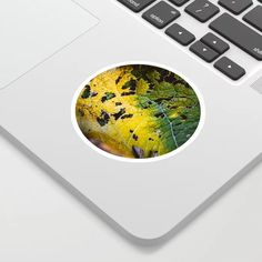 Nature Photography Sticker by lovefi Cool Stickers, Green Leaves, Nature Photography, Artwork, Work Of Art, Auguste Rodin Artwork, Nature Pictures, Artworks, Wildlife Photography