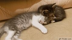 Sleeping cat like a dead