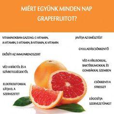 Életmód cikkek : Zöldség és gyümölcsök hatásai Grapefruit, Omega, Food And Drink, Medical, Drinks, Health, Life, Health And Fitness, Drinking