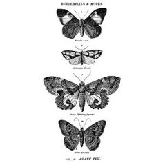 $9.61 Tim Holtz Wood Mounted Red Rubber Stamp: Butterflies & Moths 1  2.6 x 1.1 x 5 inches ; 4.8 ounces