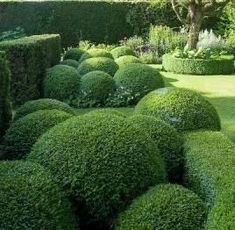 Boxwood Hedge Topiary: this would look fantastic near the kitchen end of the house, how perfect ! Boxwood Landscaping, Boxwood Garden, Garden Hedges, Topiary Garden, Boxwood Hedge, Modern Landscaping, Boxwood Topiary, Herb Garden, Vegetable Garden