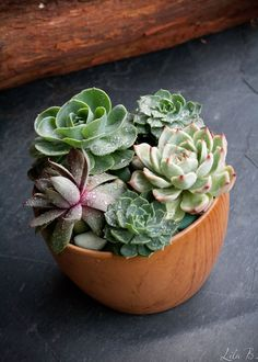 wooden bowl of succulents