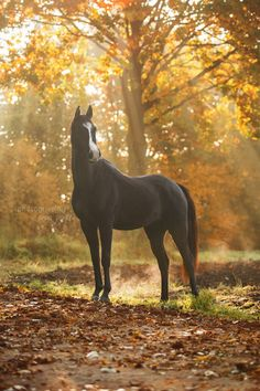 Horses, Dogs, Art and Other
