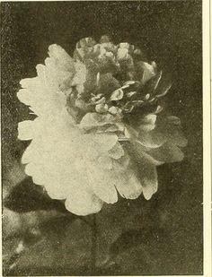 #flower #photo #blacknwhite #blackandwhite