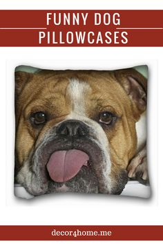 funny bulldog This amazing little English Bulldog ring can be ordered in a tiny size 4 up to a size . The bulldog is available in Sterling Silver. The metal has a lightly hand burnished Bulldog Wallpaper, Tier Wallpaper, Animal Wallpaper, Windows Wallpaper, Wallpaper Desktop, Desktop Backgrounds, Computer Wallpaper, Wallpaper Downloads, Nature Wallpaper