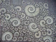Image result for Ammonite Pavement