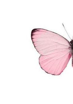 Mystique ʚϊɞ Mystic #butterfly