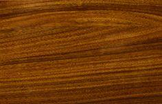Holz - H900 Palisander. Holz ist ein echter Hingucker für jede Eingangstüre. Setze auf herausragende Qualität und exklusives Design deiner Haustüre. Pieno® Türen jetzt auch bei Fenster-Schmidinger aus Gramastetten in Oberösterreich erhältlich.   #Doors #Eingangstüren #Holztüren #Holz