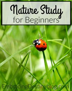 Tips for nature study for beginners. How-to for homeschoolers. Charlotte Mason homeschooling. embracingdestinyblog.com