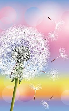 Illustration of Flower dandelion on background of sunset, vector illustration. Place for text vector art, clipart and stock vectors. Dandelion Wallpaper, Dandelion Art, Of Wallpaper, Summer Backgrounds, Cool Backgrounds, Pretty Wallpapers, Live Wallpapers, Amazing Photography, Nature Photography